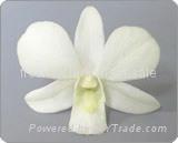 Fresh orchids flower