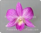 orchids flower for sale