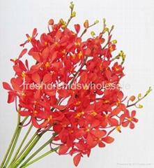 Cut  orchids for sale