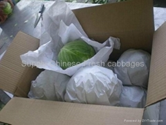 Fresh cabbages