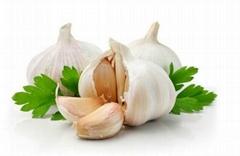Garlic Oil FCC Grade  CAS NO: 8000-78-0 distilled