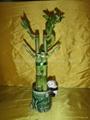 flower lucky bamboo(Dracaena sanderiana)