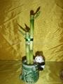 flower lucky bamboo(Dracaena sanderiana) plant for Indoor Decoration 2