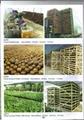 Cycas revoluta Outdoor landscaping trees Plants sago palm tree nursery 4