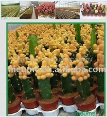 Mini Indoor Tropical Succlent Plants Cactus