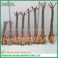 Mini 5 Braided Money tree (Pachira) House Plants  4