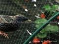Anti-bird Netting 1