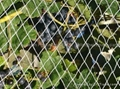 Anti-bird Netting 5