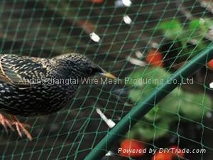 Anti-Bird Netting 2
