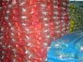 Mosquito Netting 3