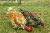 Chicken Steel Ga  anized Hexagonal Wire Mesh (Factory & Exporter)