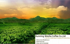 Provide the Better Coffee Beans From China