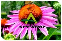 Echinacea Purpurea Juice Concentrate Powder 45: 1