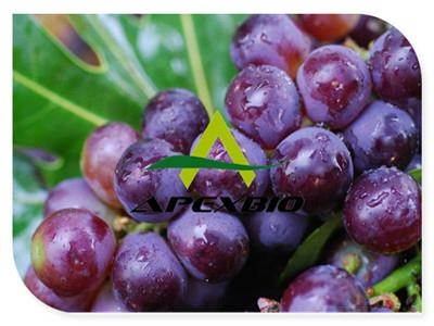 Grape Seed Powder Extract 1
