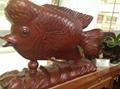 和谐盛世罗汉鱼 1