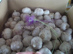 Jinxiang Normal White Garlic 10kg carton packing*
