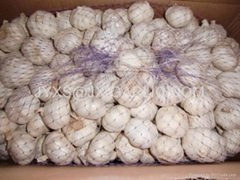 金乡保鲜纯白大蒜10千克纸箱包装