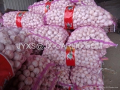 Jinxiang Normal White Garlic 20KG mesh bag packing*