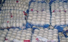 Pure White Garlic 250g/mesh bag, 5kg/mesh bag*