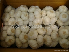 Jinxiang Fresh Pure White Garlic 500g/mesh bagX20*
