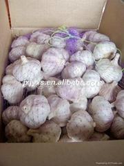 金乡保鲜普白大蒜20千克纸箱包装