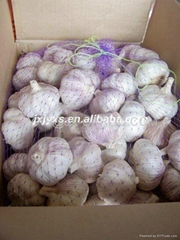 Jinxiang Fresh Normal White Garlic 20kg carton bag*