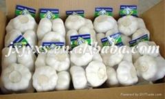 金乡保鲜纯白大蒜500克X20小包装