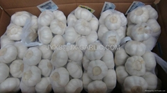 Jinxiang Fresh Pure White Garlic 500gX20*