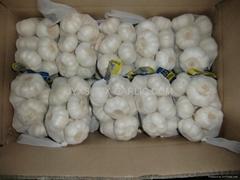 金乡保鲜大蒜500克小包装