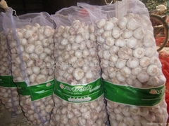 Fresh Normal White Garlic 20kg mesh bag*