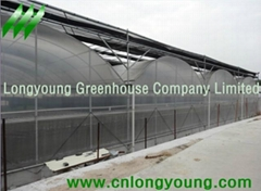Gothic Plastic Film Multi-Span Greenhouse