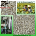 Low-price Organic Confectionary Sunflower Seed Kernels  2