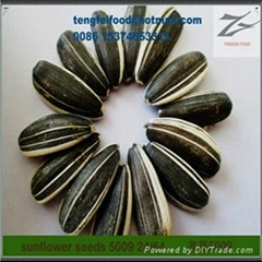 24/64 Sunflower Seeds 5009 on Sale by Factory