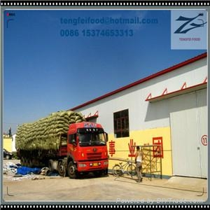 24/64 Sunflower Seeds 5009 on Sale by Factory 4