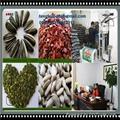 Bakery Sunflower Seed Kernels 4