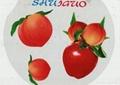 round shape sticker printing
