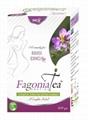 Fagonia Cretica Herbal tea 1