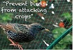 Anti-birds net