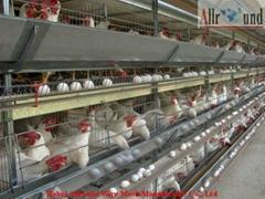 bird aviaries for sale