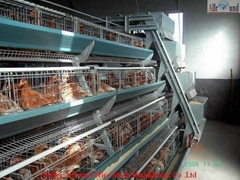 breeding cage for bird