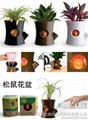 Office potted plants