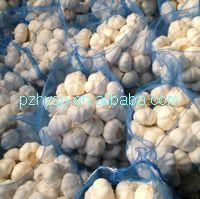 super white garlic