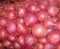 fresh red onion 1