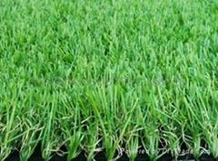Grass,turf,building grass,