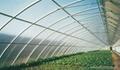 Polycarbonate Greenhouse Panels  2
