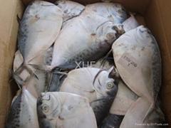 frozen fresh moonfish