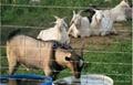 畜牧網牧區圍網