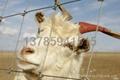 畜牧網牧區圍網 5