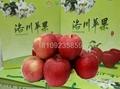 洛川蘋果禮盒