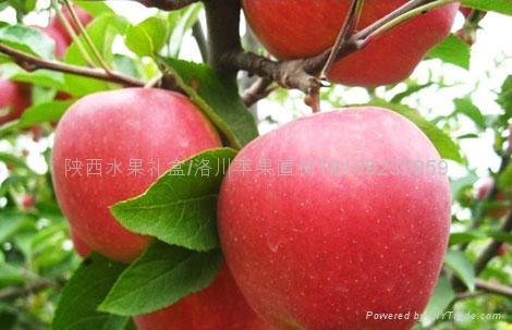 西安水果禮盒 2